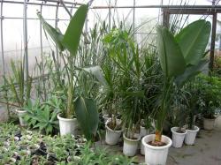 観葉植物アガベ販売専門店エドプランツ大型栽培温室