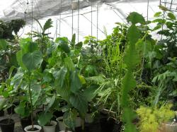 観葉植物アガベ販売専門店